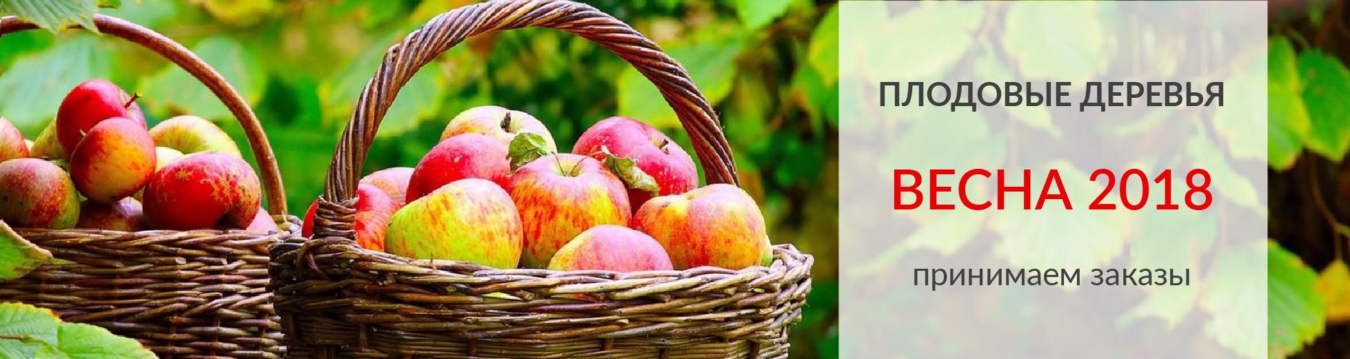Заказать семена всех разных цветов купить оптом искусственные цветы в самарской области